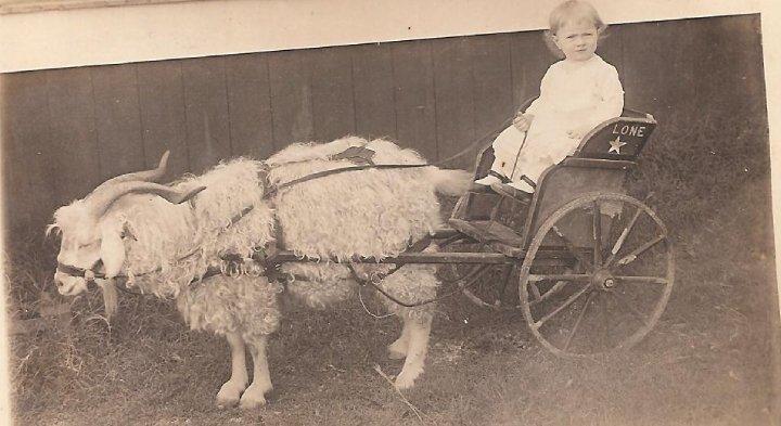 MS Rodney Photo Orig Jolly Schauf oon goat wagon.jpg